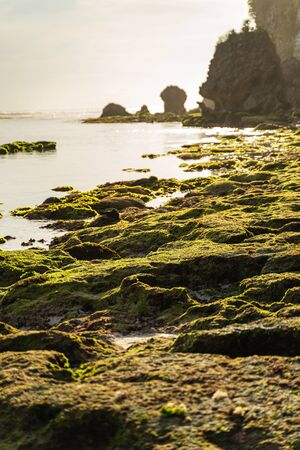 Stones covered with green moss in ocean surrounded by cliffs Reklamní fotografie