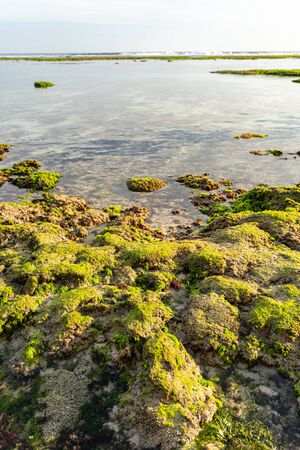 Stones in green moss in clear waters of sea in exotic country