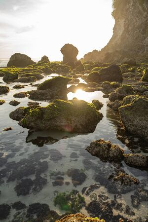 Stones under cliff are covered with moss and alga on wild ocean shore Reklamní fotografie