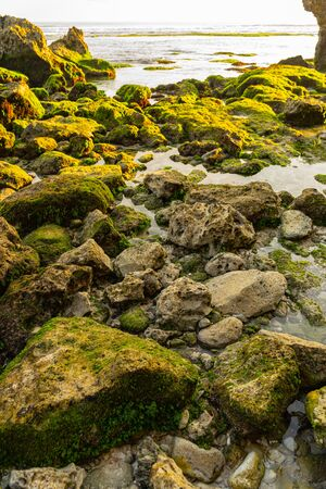 Rocks are covered with greenery and seaweed on shore of deserted island Reklamní fotografie