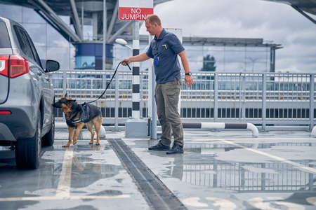 Young male inspector border guard with German Shepherd dog searching for drugs in automobile