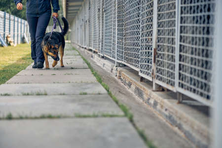 Security guard with detection dog strolling down concrete footpath and inspecting cages for storage