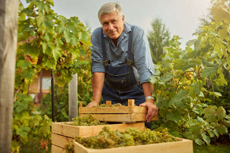 Waist-up photo of a happy vineyard owner leaning on a stack of wooden boxes full of grapes while smiling at the camera
