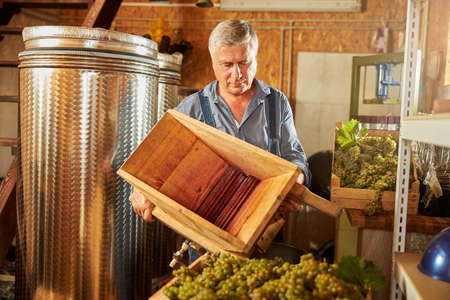Skillful grey-haired winemaker holding a wooden grape crusher in his well-equipped winery Stockfoto