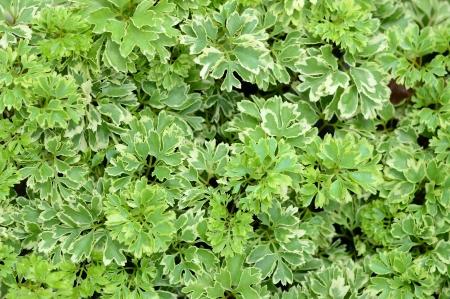 Green garden tree backgound Stock Photo - 17331961
