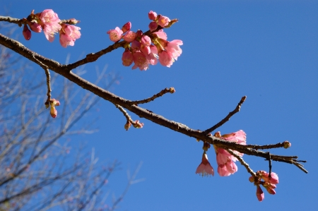 Pink flora in blue sky