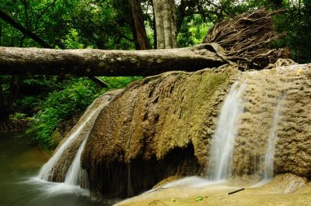 Falling tree in Kroeng Kra Via Waterfall , Kanchanaburi , Thailand Stock Photo