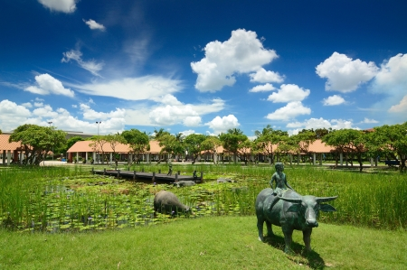 Asiatic water buffalo and width marsh with blue sky
