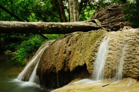 Falling tree in Kroeng Kra Via Waterfall , Kanchanaburi , Thailand Stock Photo