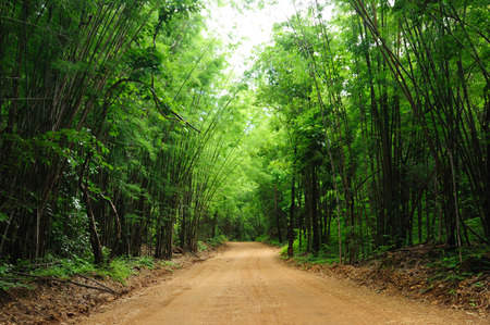 Rural bamboo road, outdoor green landscape scene