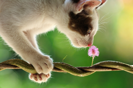 Cat smell of pink flower