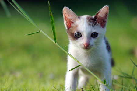 Cat look at front, on green field
