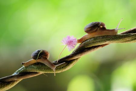 Twist slug walk behind on branch