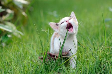 White cat smile play on yard Stock Photo