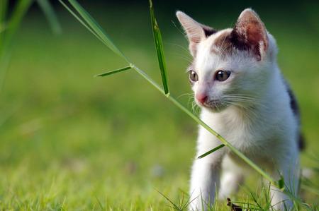 Cat watch attentively on green grass field