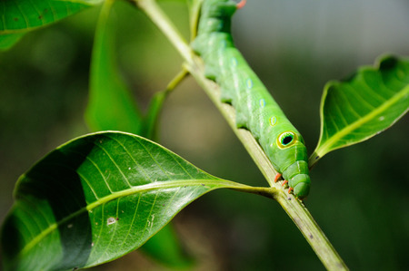 Green worm on branch on green background