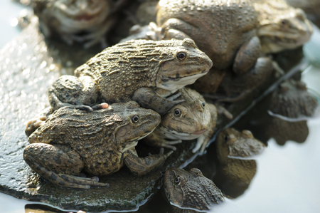 Frog farming, ape natural by set environment have some water and dry area.