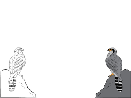 Digital drawing of two peregrine falcons