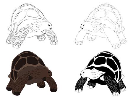 Four hand drawn turtles illustration