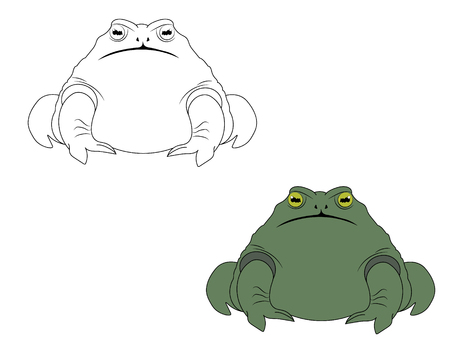 Hand drawn illustration of a toad in color and outline Illustration