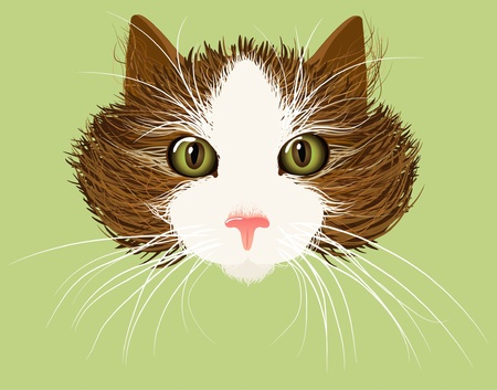 kitty cat: cat face