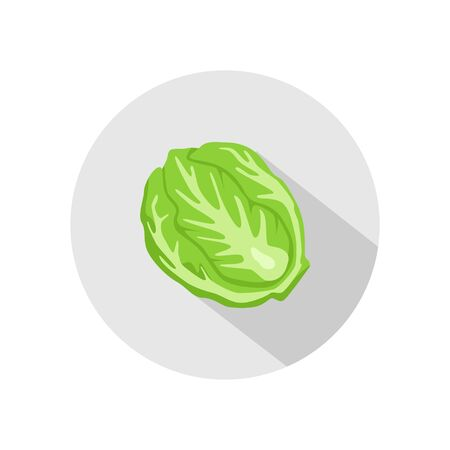 Cabbage or lettuce icon vector. illustration of cabbage or lettuce isolated on grey circle. healthy vegetable, nutrition icon