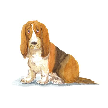 watercolor cartoon basset hound dog on a white background Stock Photo