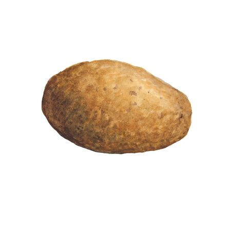 Watercolor illustration of potatoes on a white background