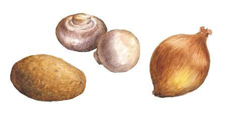 Watercolor illustration of champignons, onion and potato on a white background