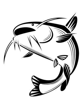 catfish: graphic catfish