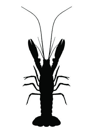 graphic lobster on white background