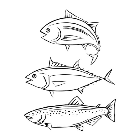 Drawing tuna and salmon fish, vector Ilustrace