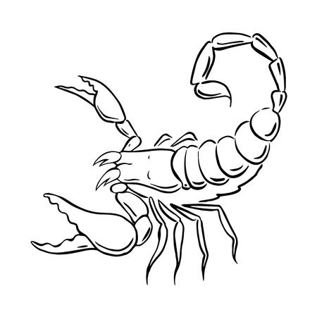 graphic scorpion, vector