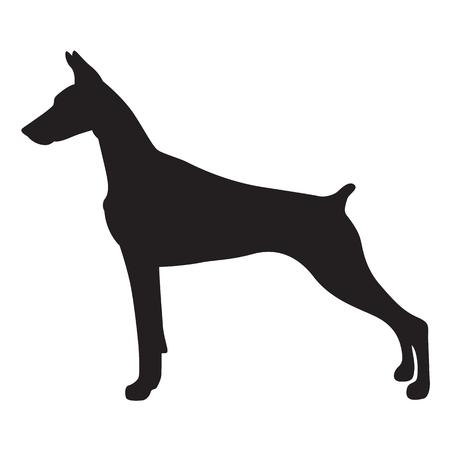 Shadow doberman dog, vector Vettoriali