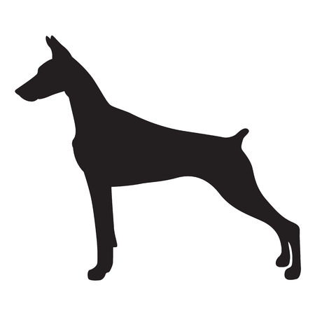 Shadow doberman dog, vector Illustration