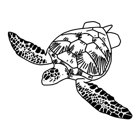 hand draw sea turtle vector royalty free cliparts vectors and