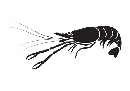 graphic shrimp, vector