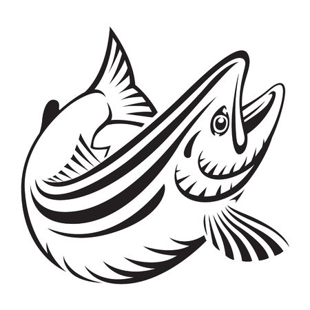 graphic salmon fish , vector Illustration