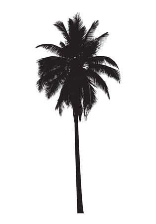 palm tree Ilustração