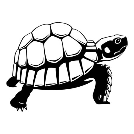 graphic turtle vector illustration