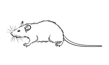 Walking rat line drawing on white background