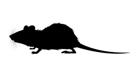 graphic shadow rat on white background, vector