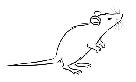 Rat sketch image on white background, vector Illusztráció