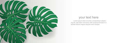 cut paper monstera leaves on white background, vector page templates and ads Иллюстрация