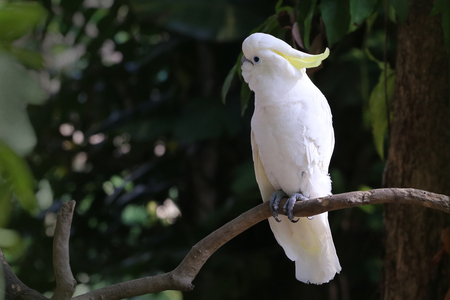 cockatoos: cockatoos Stock Photo