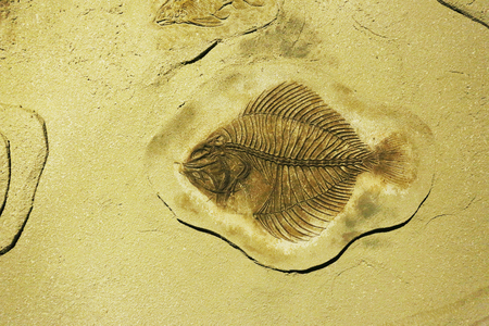 million fish: fish fossil