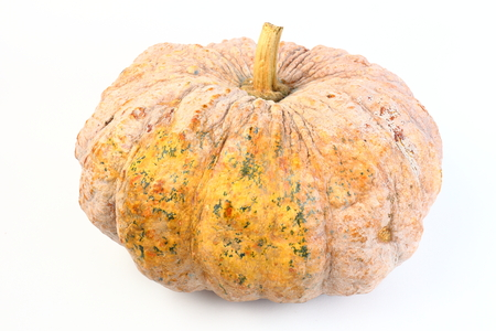pumpkin ugly rot isolated on white background
