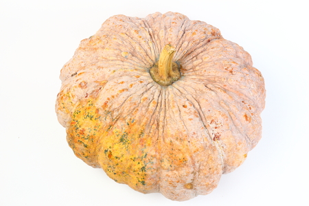 rot: pumpkin ugly rot isolated on white background