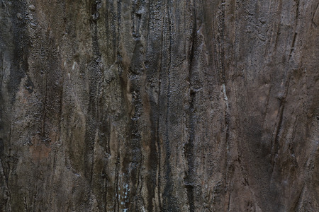 history background: Texture - a bark of an old tree