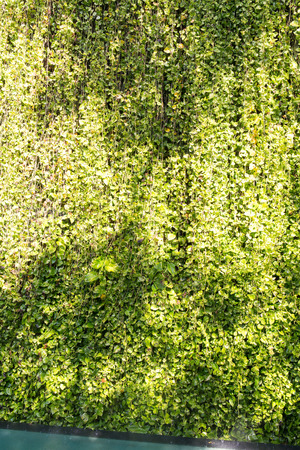 tree vertical: Green leaf background with vine wall and Shadow tree, vertical